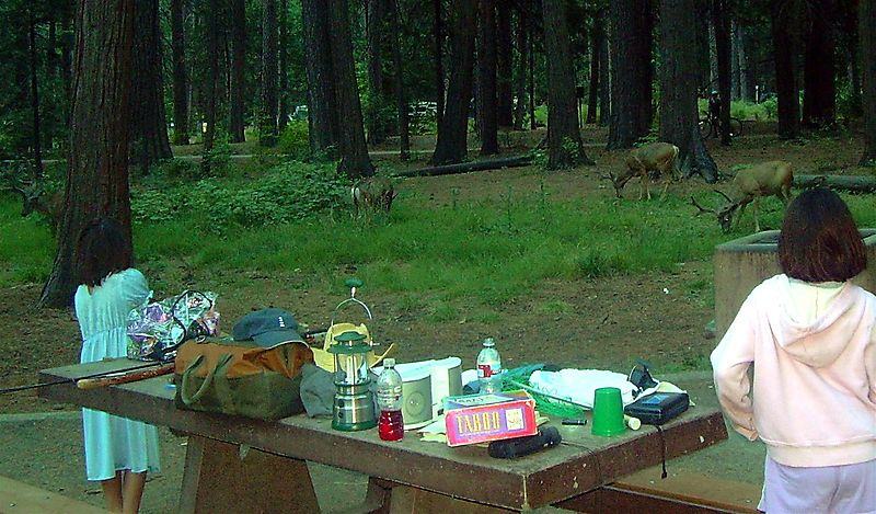 Deer in Camp